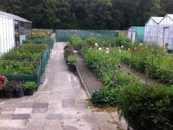 Geerlings Dahlia Garten