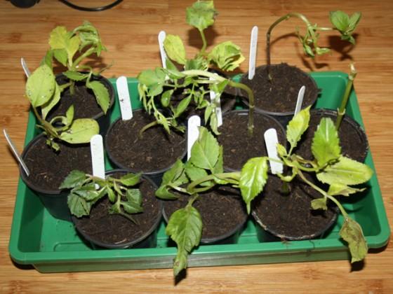 Pflanzen 1