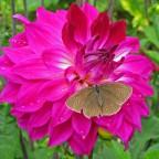 Schmetterling Salzburg 122