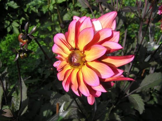 DivD Pastel Florart