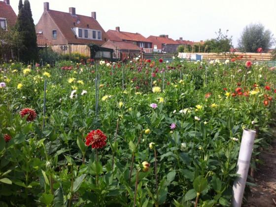 Garten von Frans Sturm