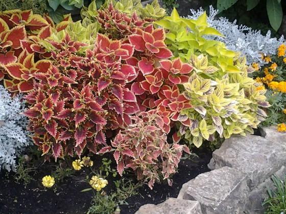 ...diese Pflanzen sind auch sehr schön....