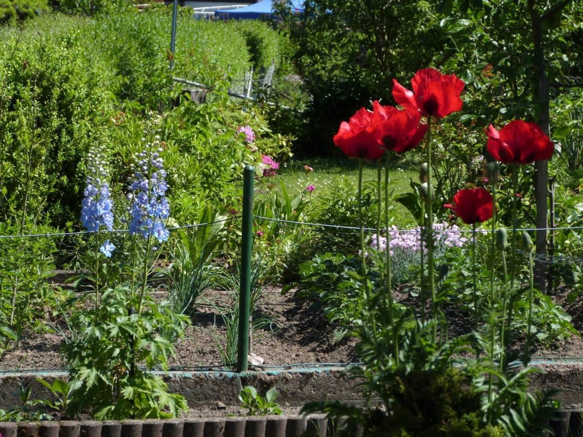 Mein Garten