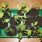 Pflanzen 2