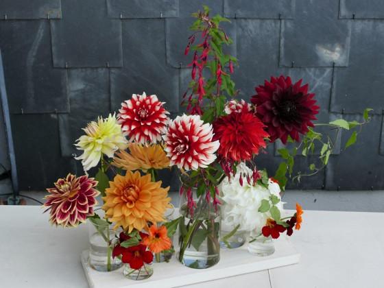 Dahlien in der Vase