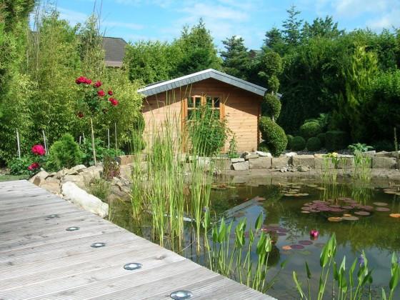 Rosen am Teich