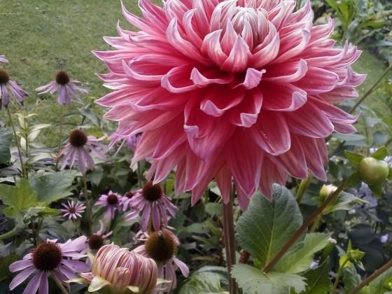 Gyo-un,  letzte Blüten